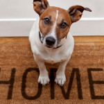 8 Tricks for Keeping Your Pet-Friendly Home Odor-Free