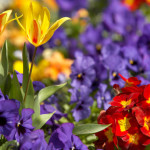 Significant Meaning of Flowers