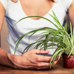 6 Houseplants That Are Easy to Keep