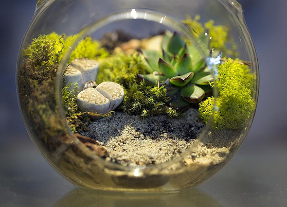how to make a terrarium out of plastic container