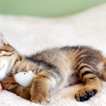 7 Ways to Naturally Fall Asleep Faster