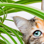 8 Houseplants to De-stress your Home