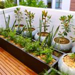 6 Steps to Growing an Indoor Herb Garden