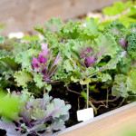 Weekend DIY: Gardening for Small Spaces