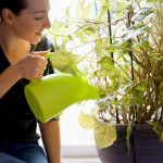 Best Conditions for Feng Shui House Plants