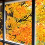 Fall Sleep Tips: How Season Changes Impact Sleep