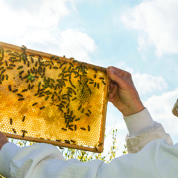 A Guide to Urban Beekeeping